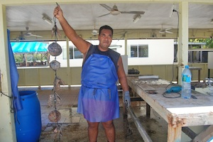 Rangiroa worker holding oysters-300x200