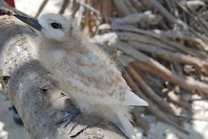 baby-bird-300x200