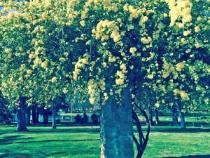 Yellow Flowers Land Park
