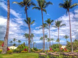 grassyknoll and palms
