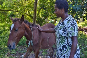 Leitau Harry and Pony in Tanoliu, Vanuatu